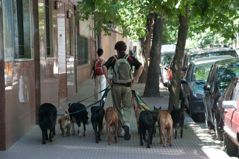 Dog walkring in BA