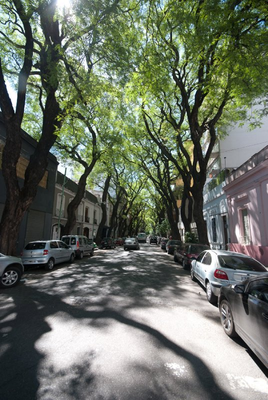 Beautiful trees in Palermo