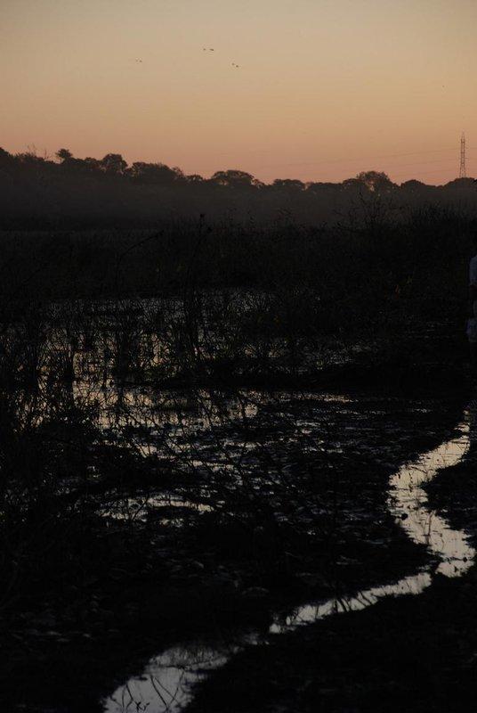 Pantanal at dusk