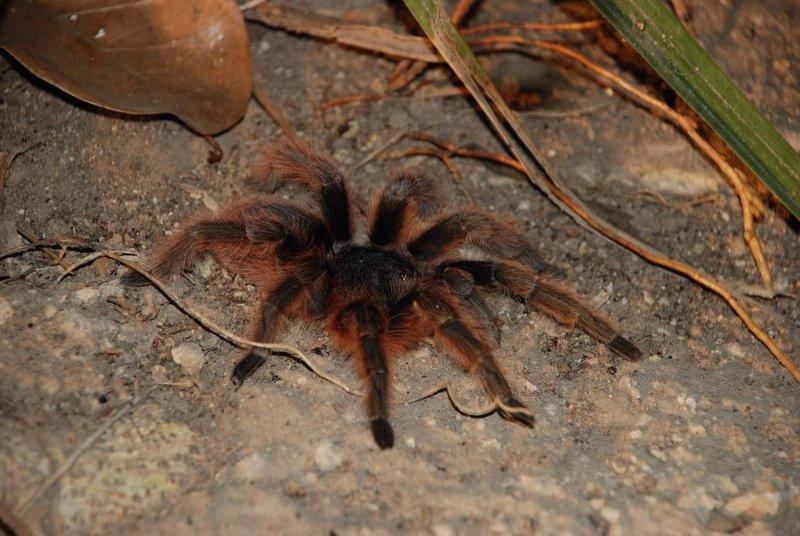 Incey wincey Spider...