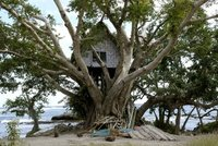 Tree house Tanna