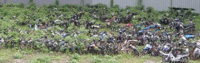 Undergrowth vs motosikals