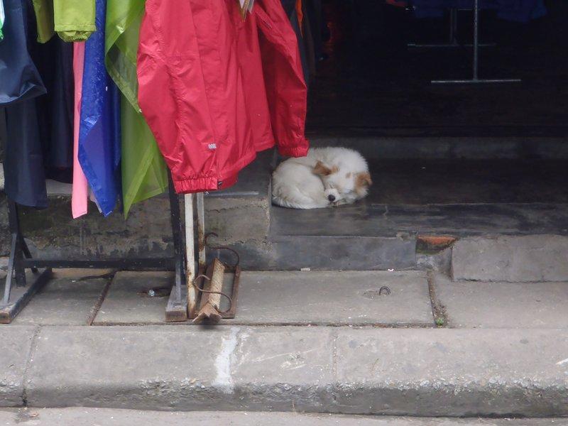 Sleeping dog near Hue Citadel