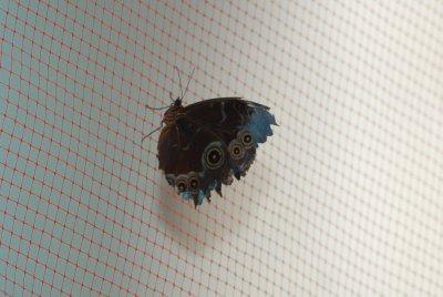 Butterfky habitat