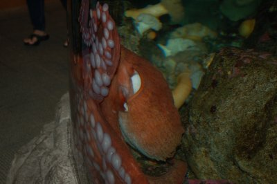 An octopus!!  They are so slimy and yucky looking!!!