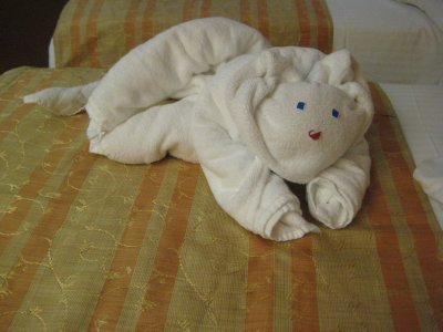 Towel animal of the day.