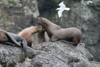 These sea lions were tussling around.
