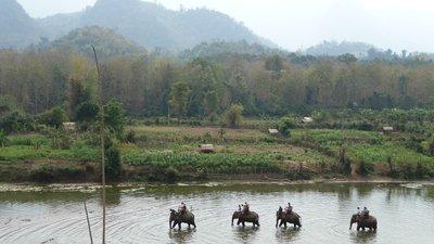 amazing elephant village!