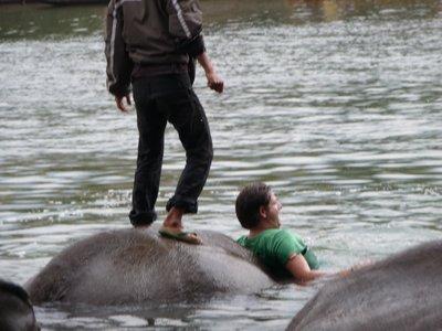 Boy gives elephant a lap dance