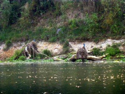 Chitwan-069.jpg