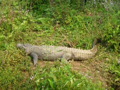 Chitwan-121.jpg