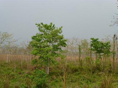 Chitwan-138.jpg