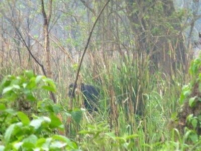 Chitwan-146.jpg