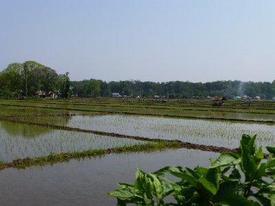 Chitwan-164.jpg