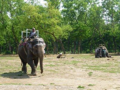 Chitwan-172.jpg