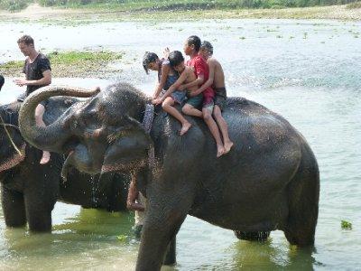 Chitwan-233.jpg