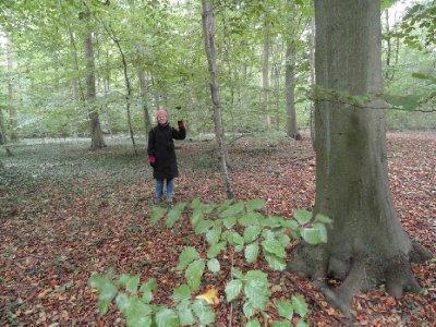 Risskov Forest