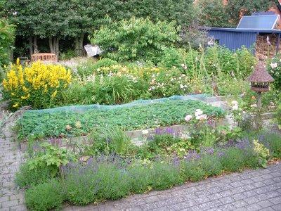 Garden at 9 am