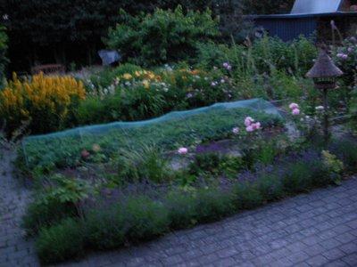 Garden at 1030 pm