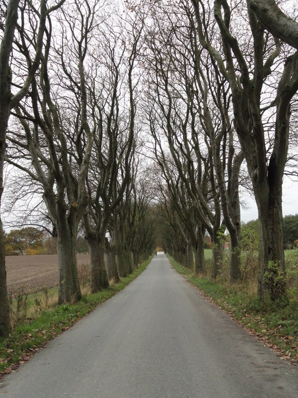 Avenue of trees that have already lost their leaves, Moesgård Alle