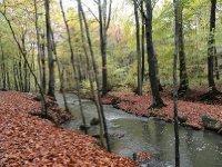 Autumn leaves create a beautiful carpet beneath the trees