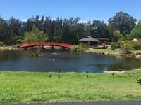 Japanese Garden at Coffs Botanic Garden