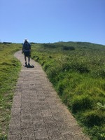 The path up Mutton Bird Island