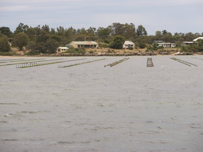 Coffin Bay Oyster farmers