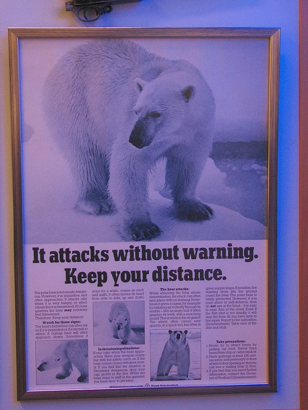 Polar bear warning poster
