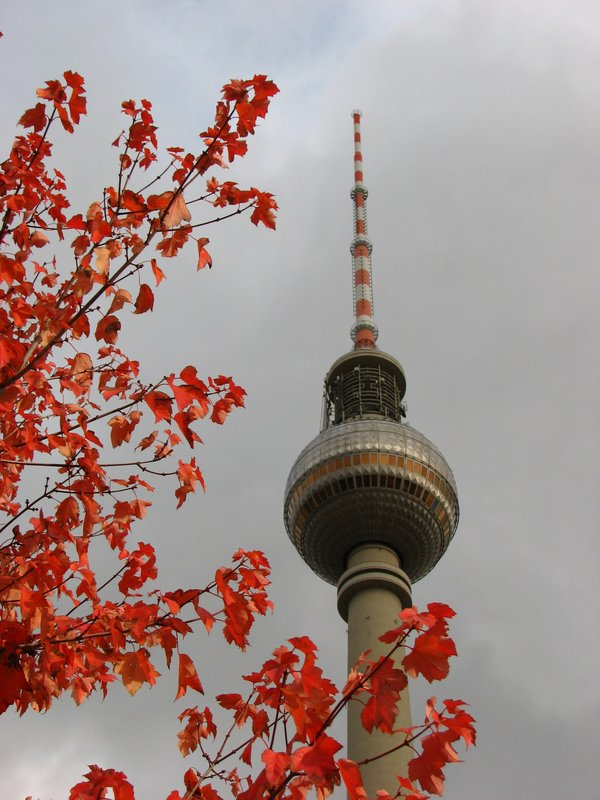 TV Tower and leaves