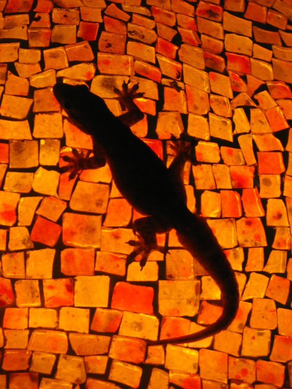 Gecko silhouetted against a mosaic lamp