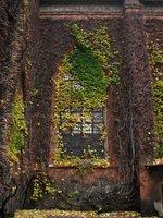 Leafy window