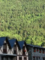 Buildings and forest