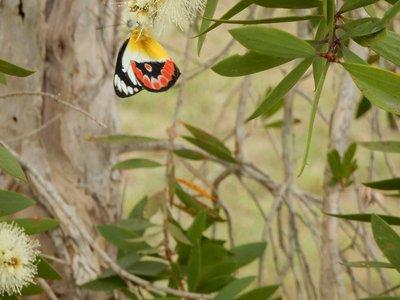 Butterfly @ Esk