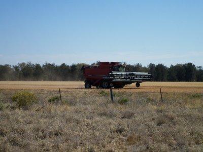 Wheat harvesting, St George, QLD