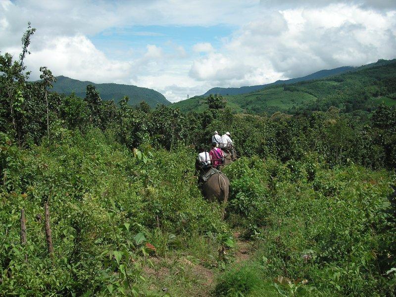 Elephant riding (Chiang Mai)