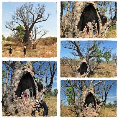 Boab_tree.jpg