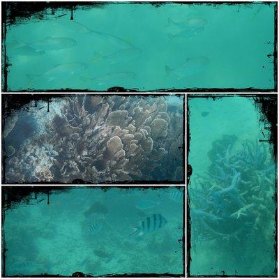 Coral_Bay2.jpg