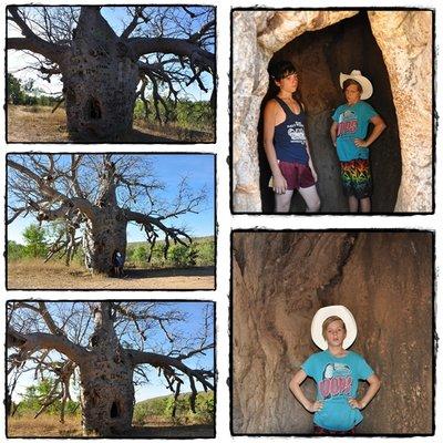 The_prison_Boab_Tree.jpg