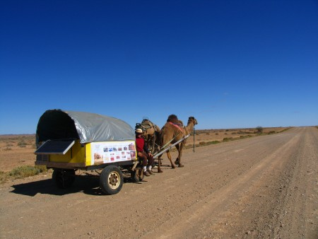 man and camels 3