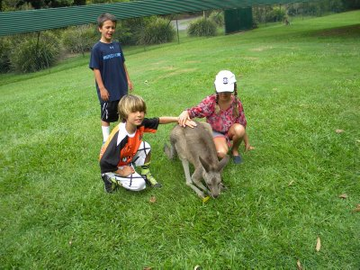 Kids Petting the Kangaroo