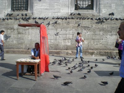 Istanbul - Pigeons