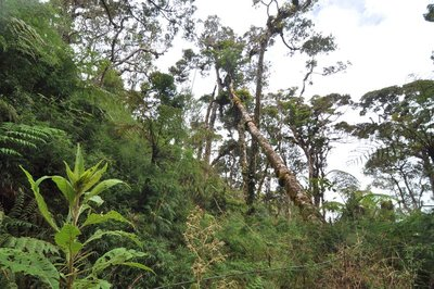 Forest on the ascent of Mount Kinabalu