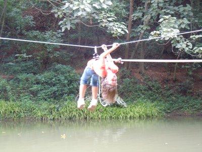How high can alligators jump