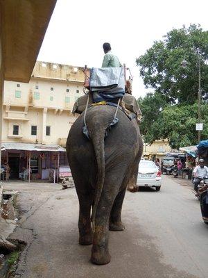elephant_rear.jpg