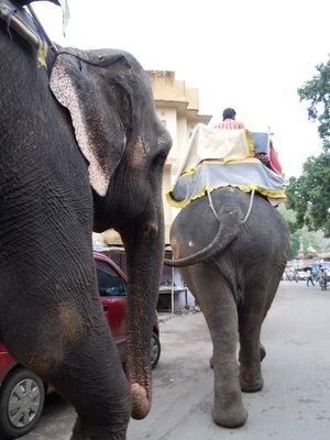 elephant_traffic.jpg