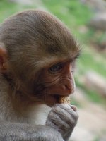 monkey_profile_1.jpg
