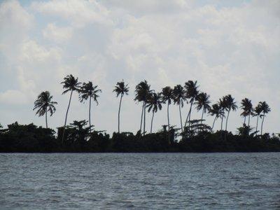 ubiquitous_palms.jpg