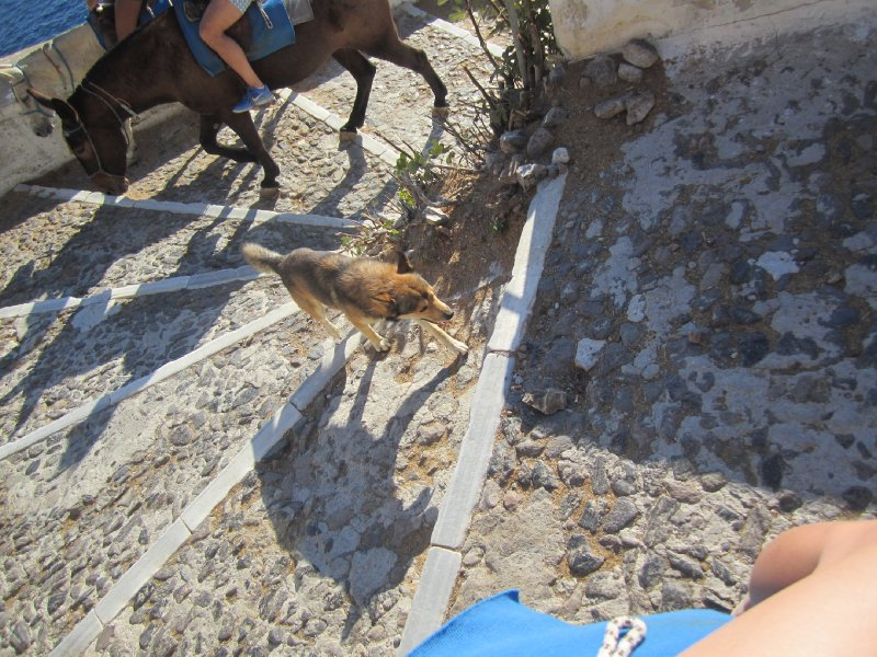 The Guide Dog for our Donkeys