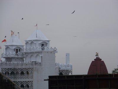 Delhi__65_.jpg
